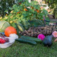 Fall Garden Guide