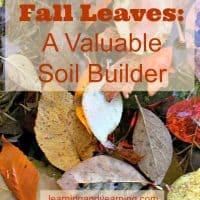 Fall Leaves: A Valuable Soil Builder |