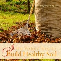 Fall: The Perfect Time to Build Healthy Soil