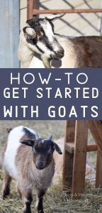 photo collage of two goats with text overlay that reads: how to get started with goats