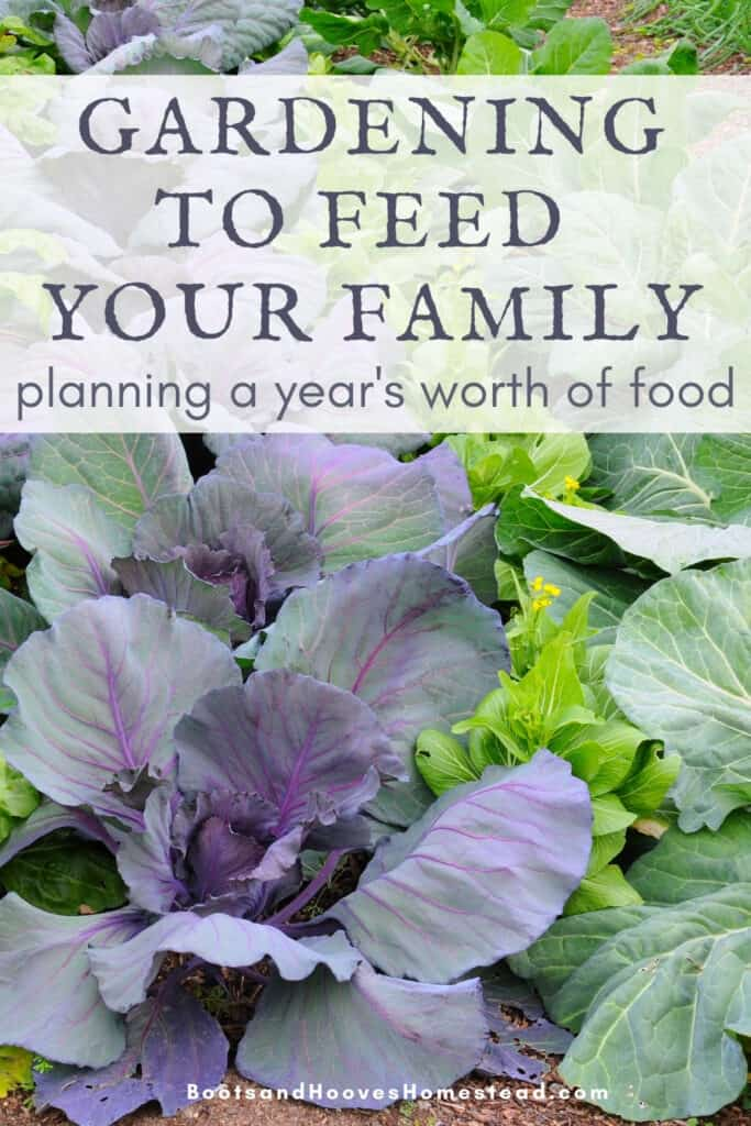 companion planting cabbage in the family garden plan