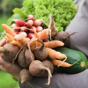 lady carrying handful of fresh harvested garden vegetables