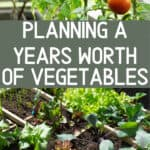 planning out a vegetable garden