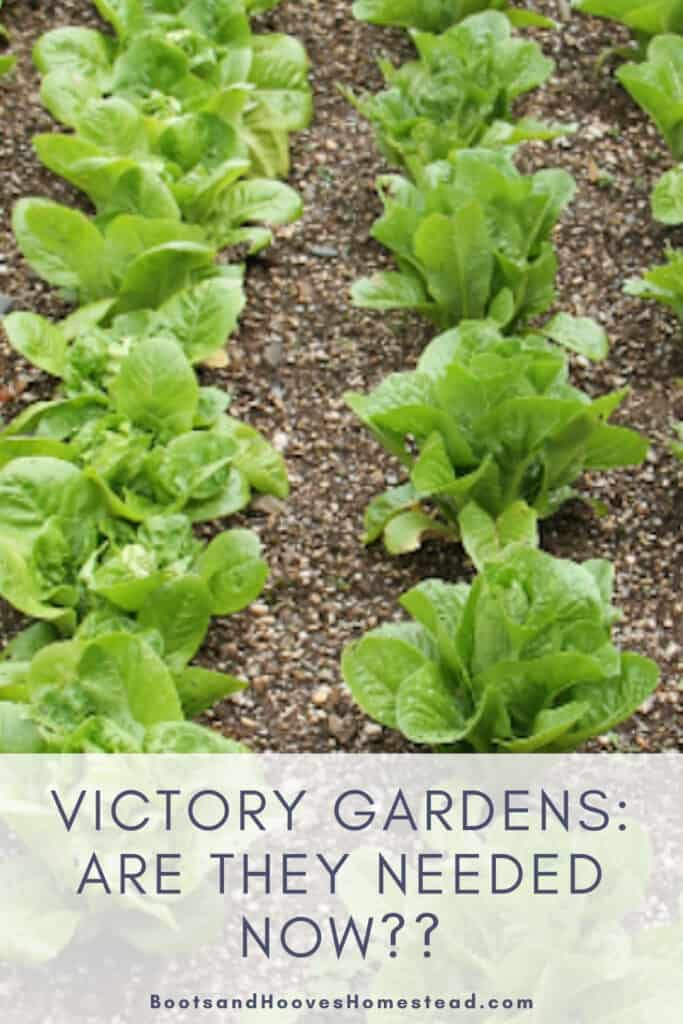 "garden plot with text overlay that reads ""victory gardens: are they needed now??"""