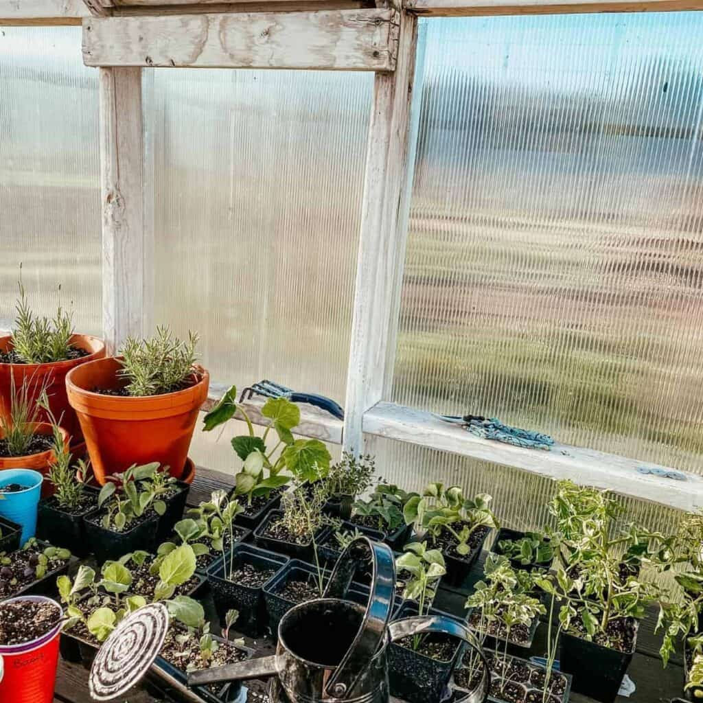 garden starts inside of the greenhouse