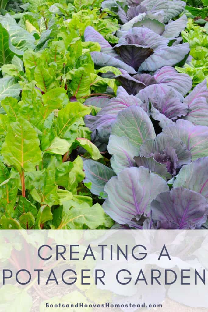 cabbage and chard growing in garden