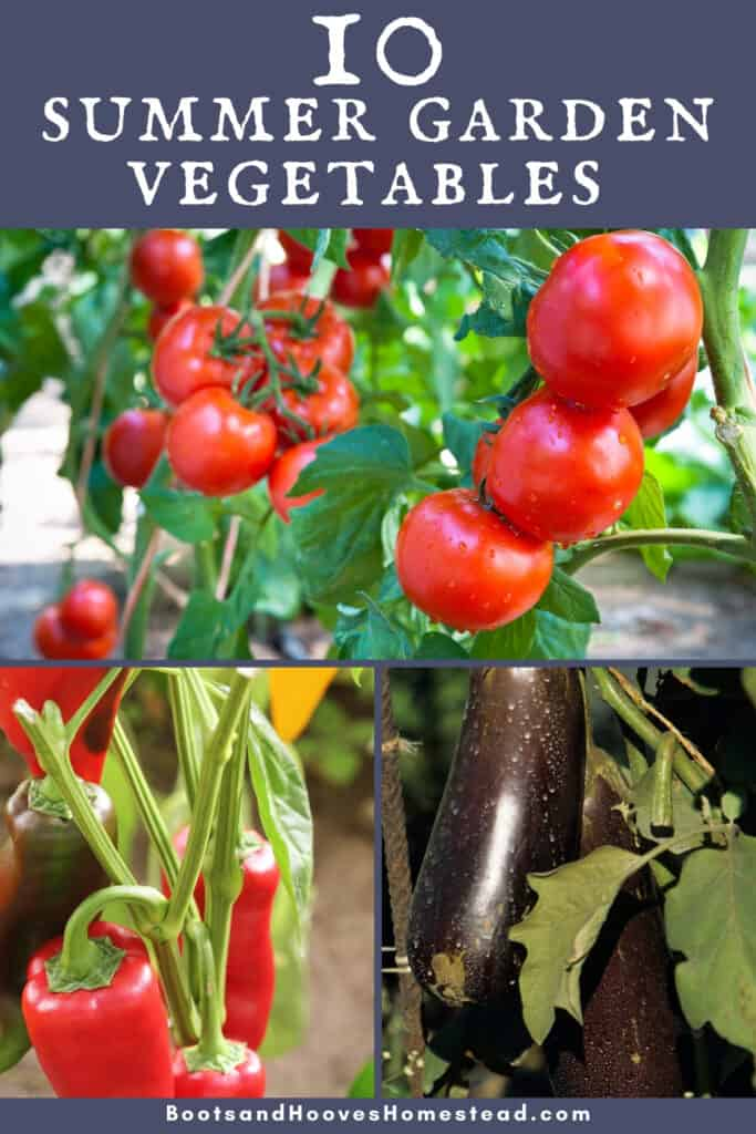 photo collage of three images of tomato, pepper, and eggplants in the garden