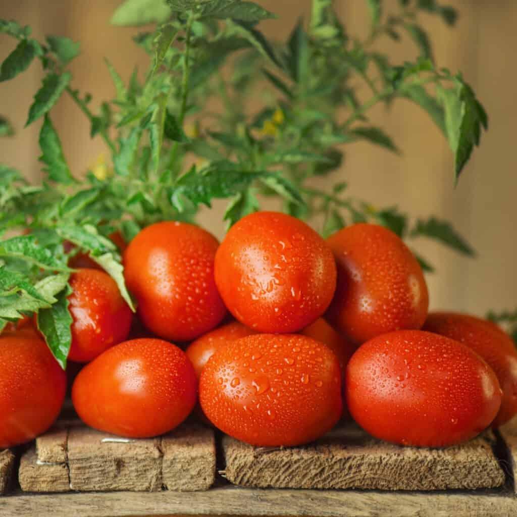 roma tomato on wooden pallet