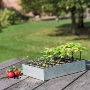galvanized seed starting trays on outdoor table with seedlings inside