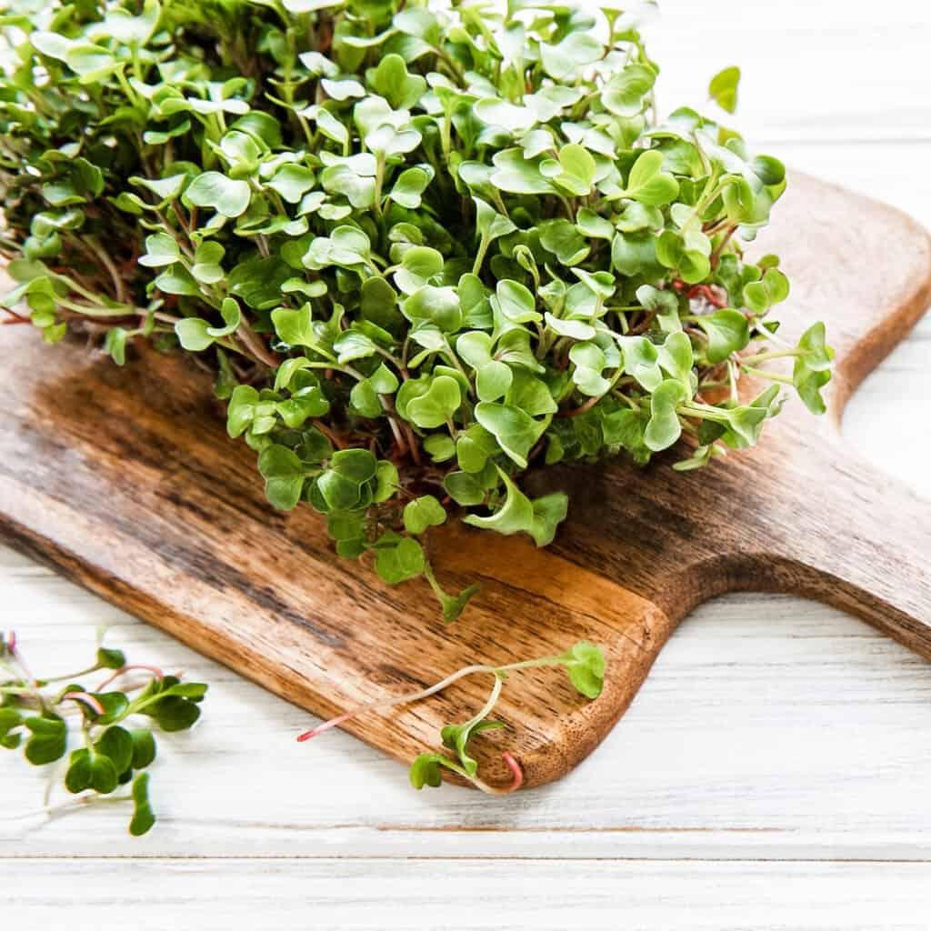microgreens on a wooden cutting board