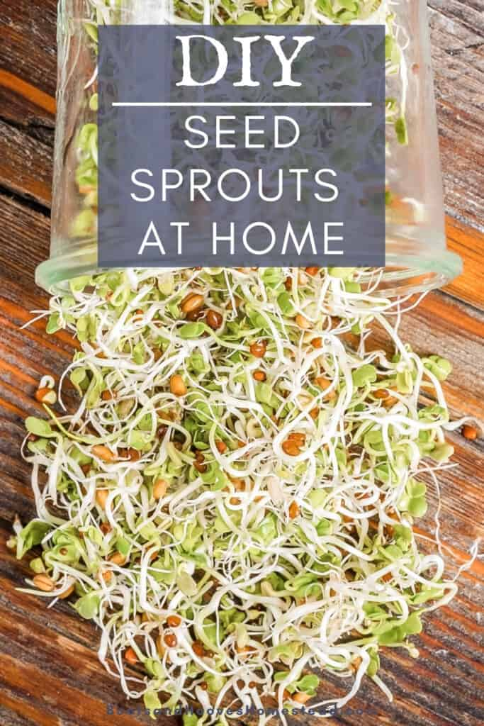 spread of fresh sprouted legumes spilling out of a glass mason jar