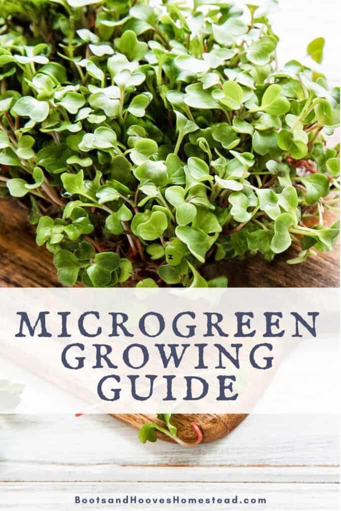 close up image of microgreens indoors