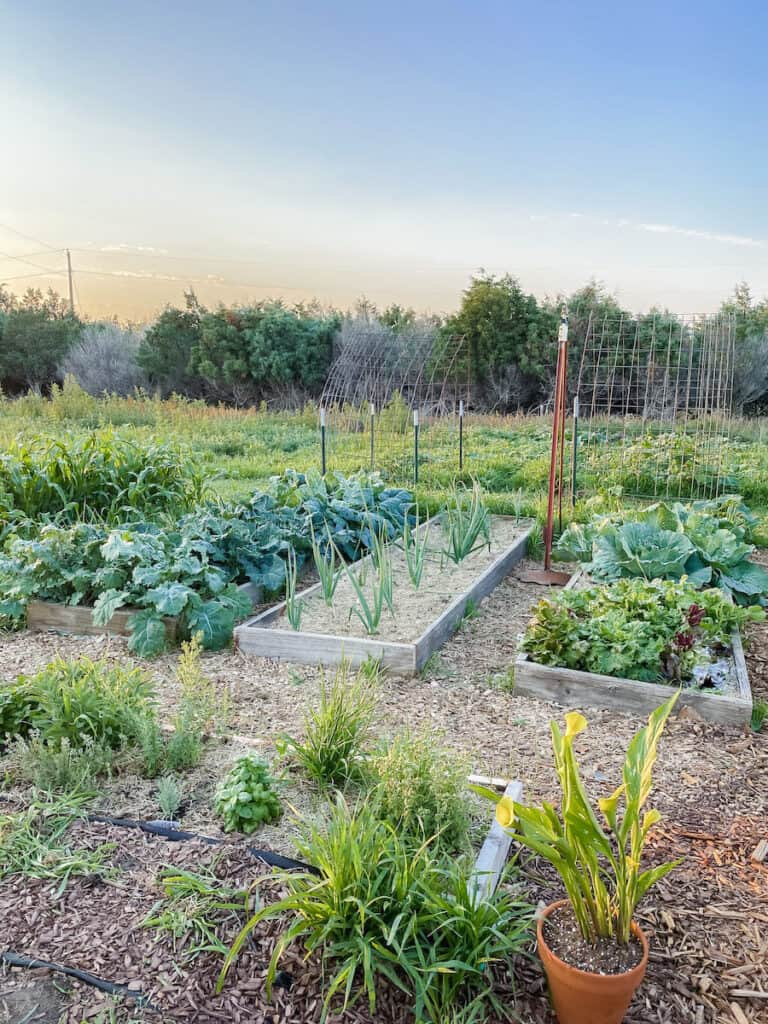 summer potager garden tour of the raised beds