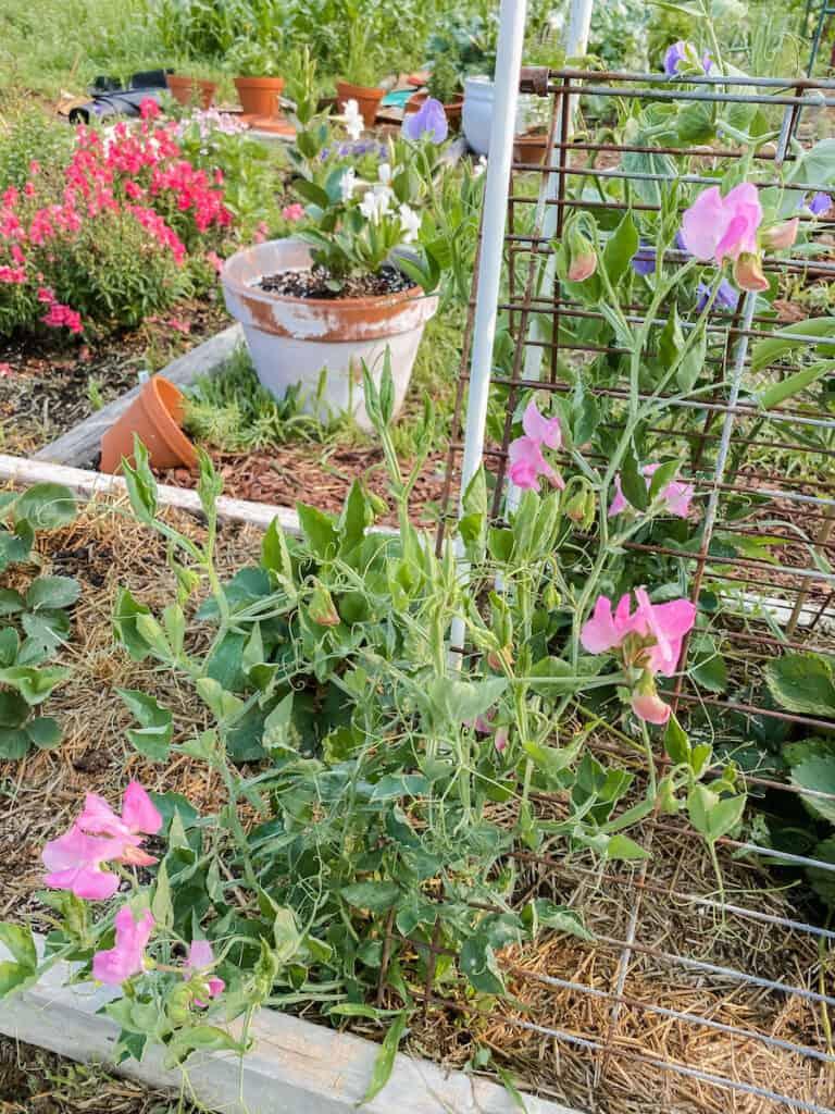 flowers in the garden beds