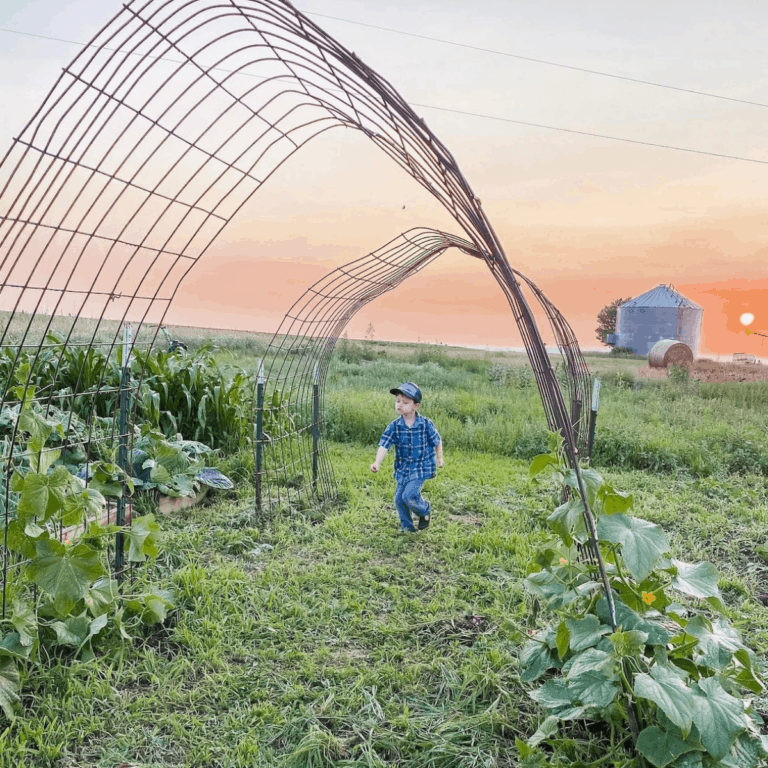little boy running through the garden arch with the sunset in the background
